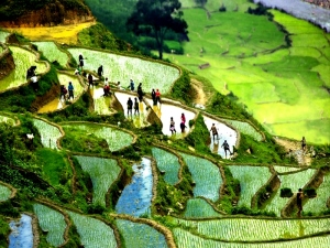 From-Ha-Long-bay-to-Sa-Pa-Trekking-in-Sapa-11days-2