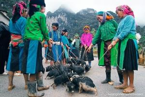 At-the-pig-market-Ha-Giang-Nhiem-photography